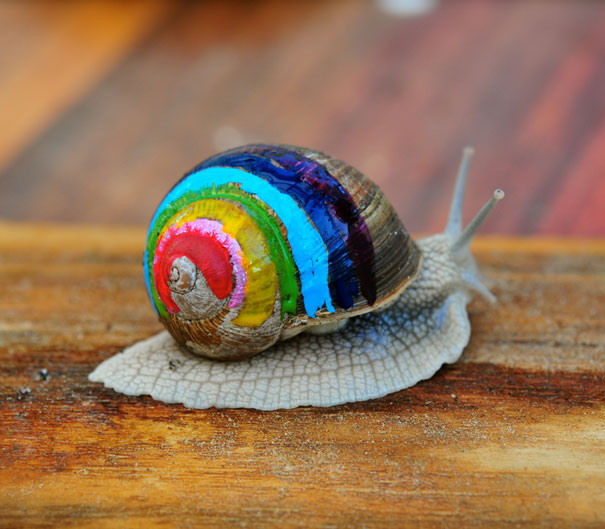 painted-snail-shell-1