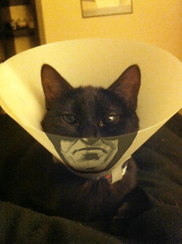 catman-cone-collar-1
