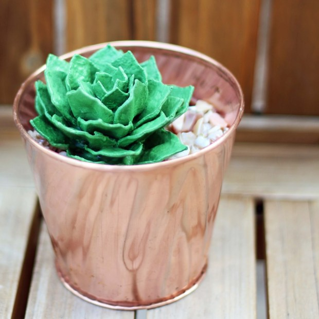 egg carton succulent - square 5