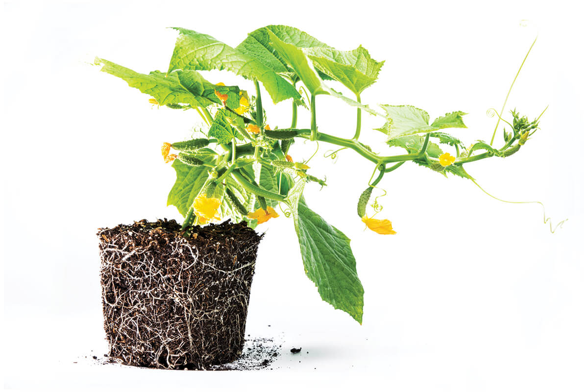 Understanding How Plant Roots Take In Water And Nutrients