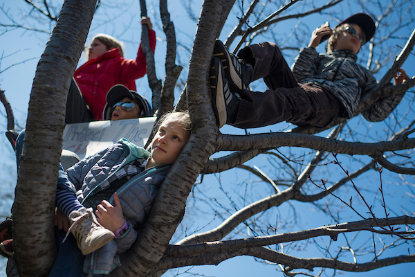 Cedar Boyd, 9, of New Jersey, hangs out in a tree near the student-led March for Our Lives rally. (Tom Williams/CQ Roll Call)
