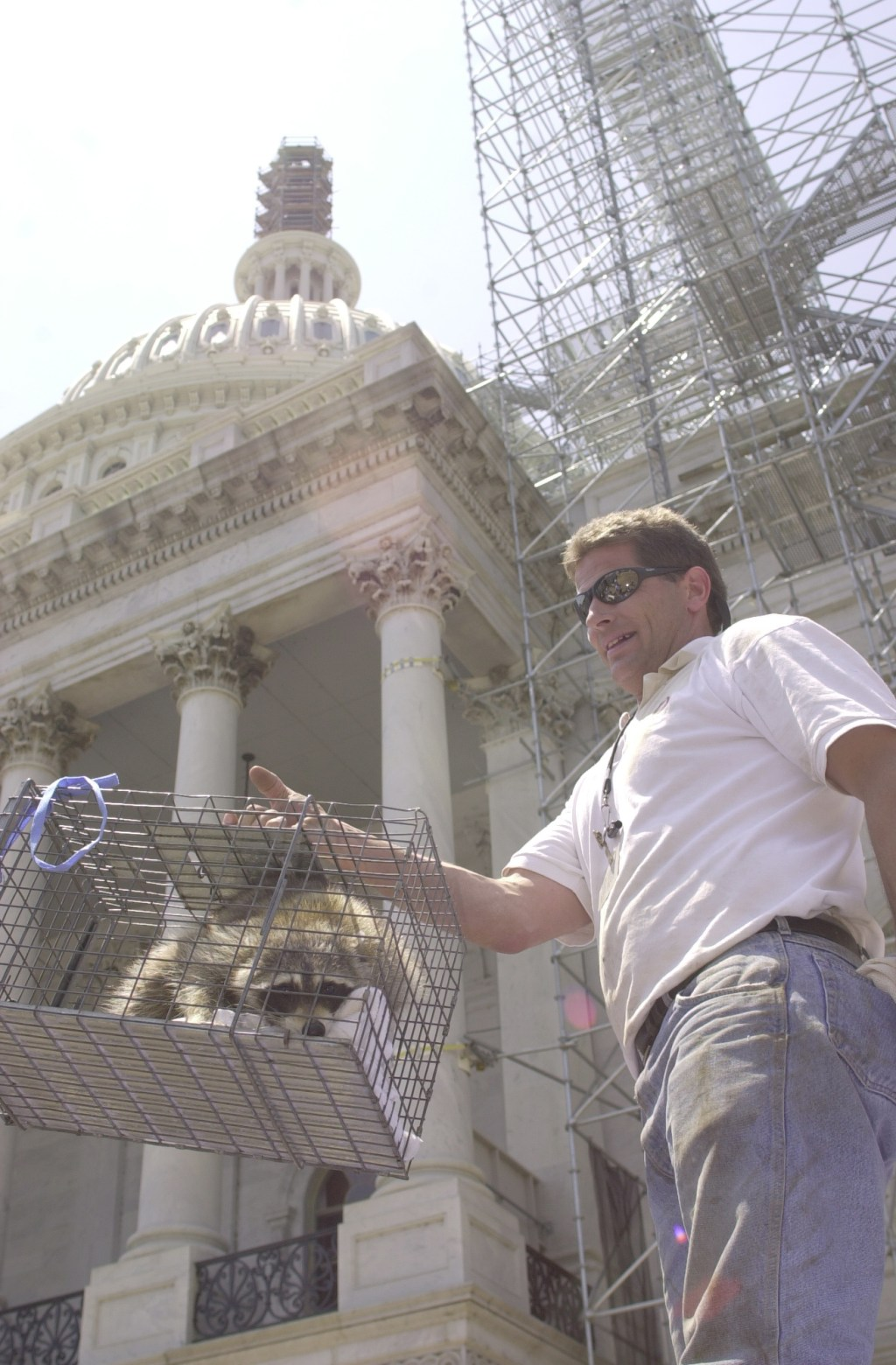 Racoon.2(TW) 053100 --Bruce Tinkham of the Aulson Co. displays a racoon after it had been captured form the Capitol's dome.