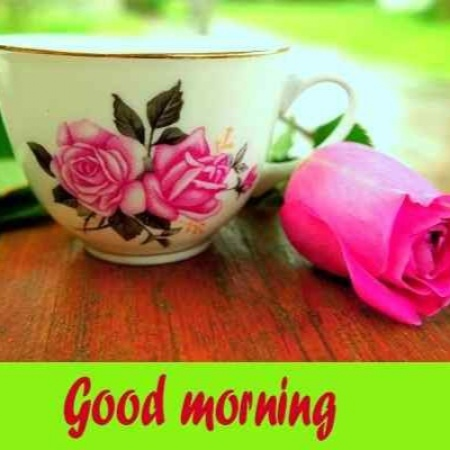 Cute Photos Of Good Morning Flower Free Download For Whatsapp Friends Mirchistatus