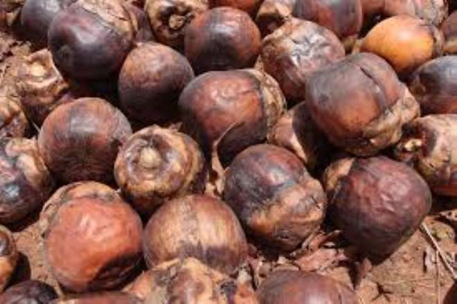 7302020125740-23041q5ddx-1596019962791 ebony--dry-fruits