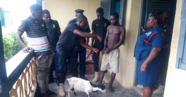 Man Arrested For Allegedly Having Sex With Goat