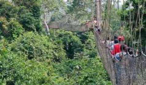 Tourism At Kakum National Park Drops