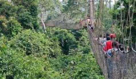 Tourism At Kakum National Park Drops