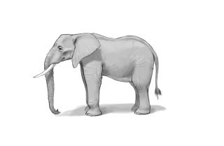 Detailed drawing of an elephant