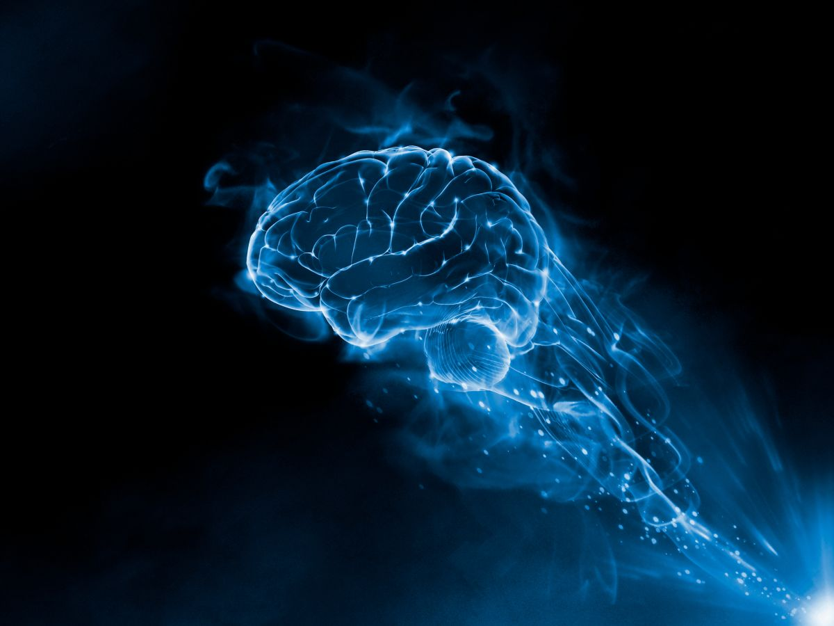 10 Things We Learned About The Brain In
