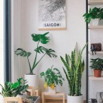 A Guide To Aesthetic Plants The Most Stylish Houseplants Of 2020 Real Homes