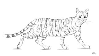 Sketch of cat with patterned fur