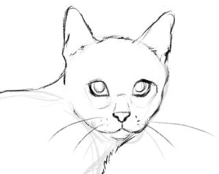 More defined sketch of a cat