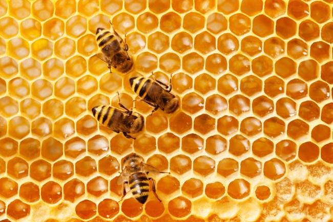 where do honeybees live