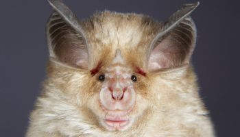 New coronavirus may have started in bats. But how did it hop to humans?