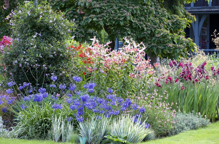 Garden Plant Ideas 10 Easy Steps To Know What Plants To Put In Your Garden Real Homes