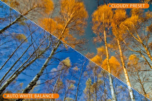 Split screen shows trees photographed with different settings