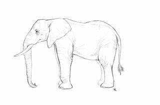 Detailed sketch of an elephant