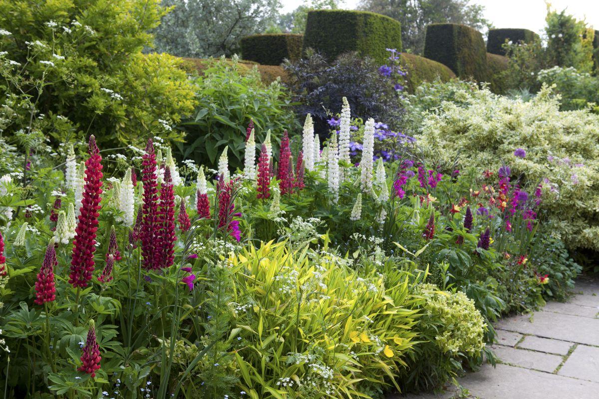 Garden border ideas: 23 tips for making your border ... on Backyard Border Ideas id=46011