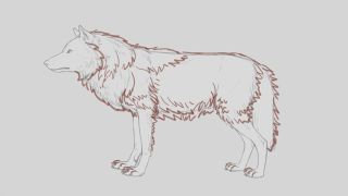 Pencil sketch of wolf with a winter mane