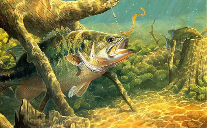 تفسير حلم السمك الحي موسوعة