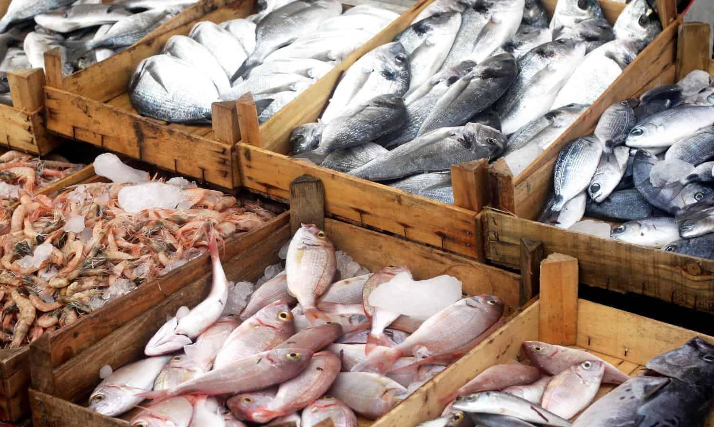 تفسير شراء السمك في المنام موسوعة