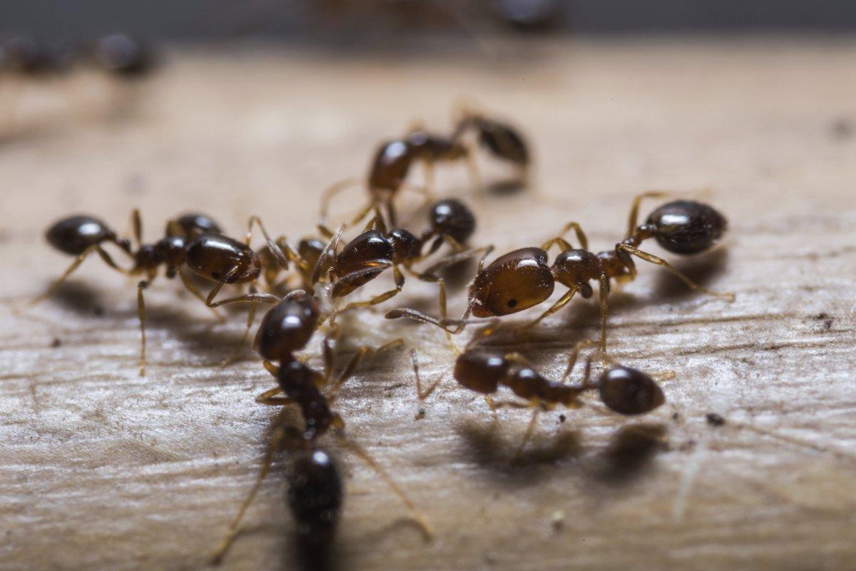 تفسير رؤية النمل في المنام موسوعة