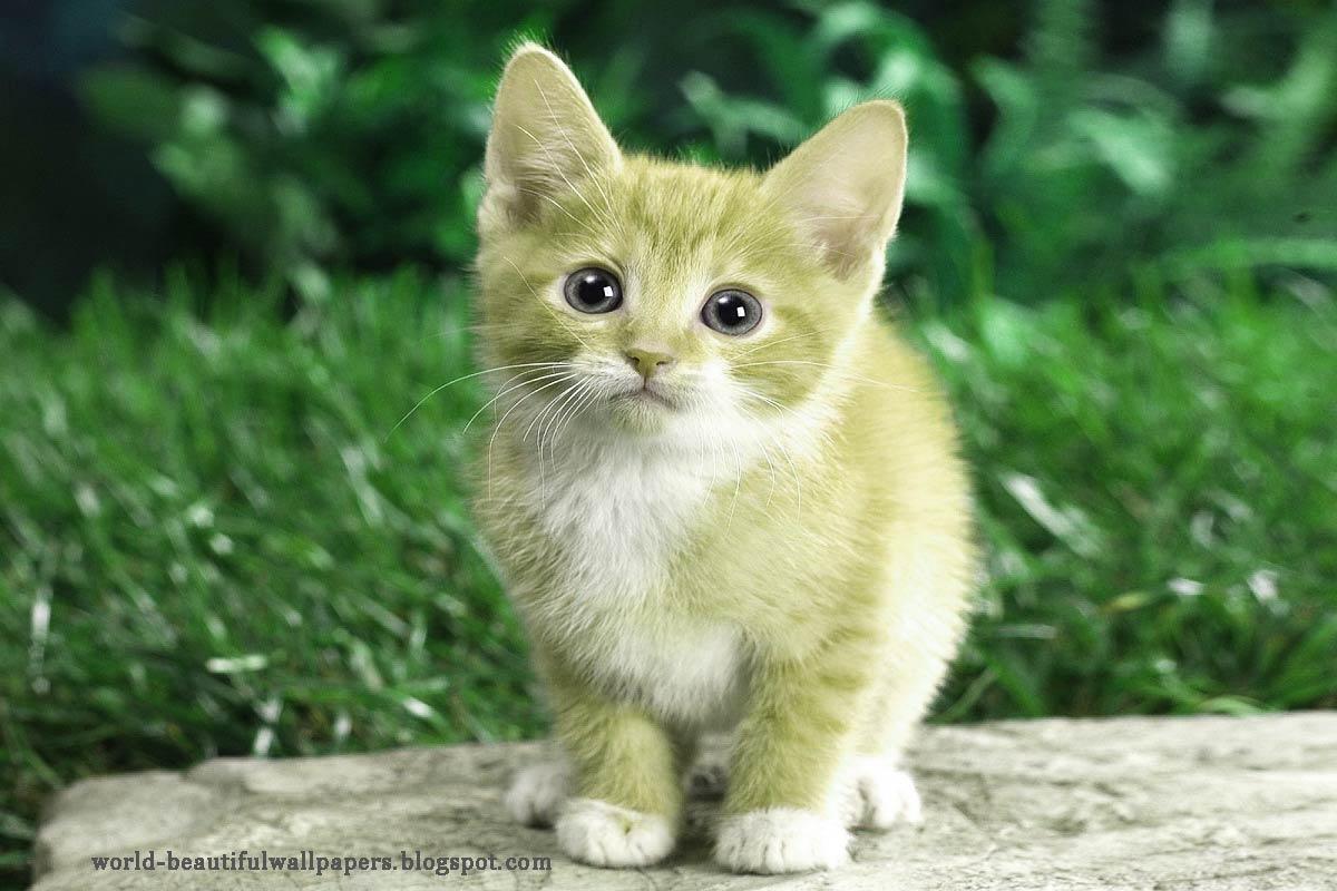 تفسير رؤية القطط في المنام والخوف منها موسوعة