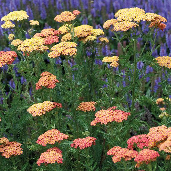 Winter Hardy Pond Plants