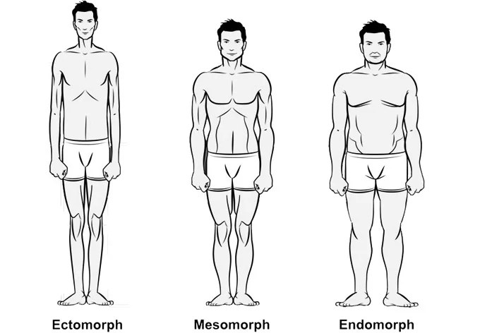 Image result for ectomorph
