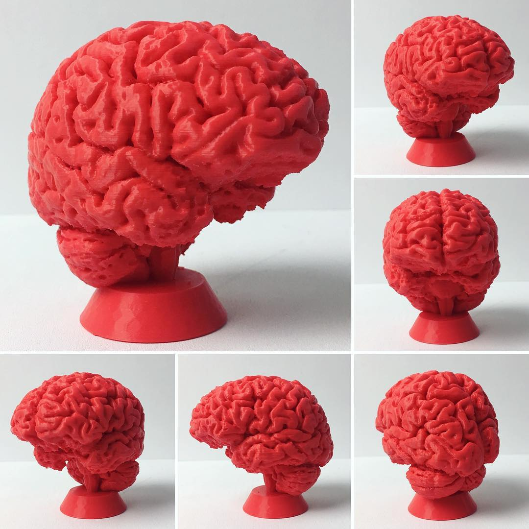 3d Printable Human Brain By Vaclav Krmela