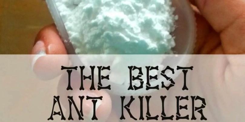 The Best Ant Killer