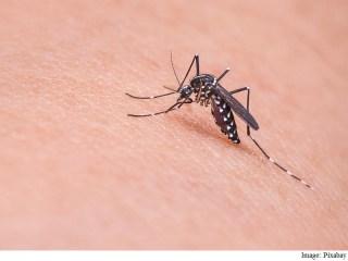 Malaria, Cancer