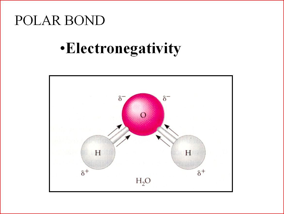 Biology Polar Bonds