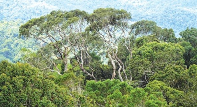 Forest lands for Chena Cultivation? Cabinet Paper to be presented on Wednesday.