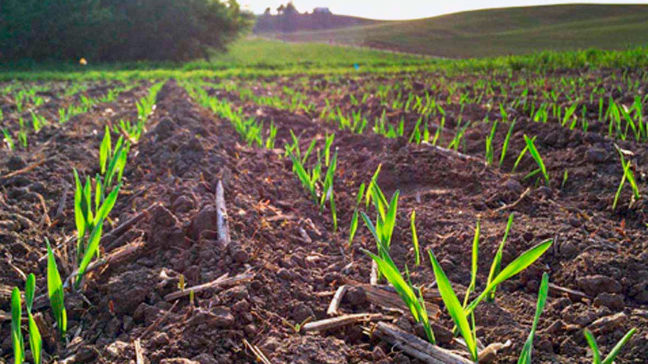 Dia Mundial do Meio Ambiente: Secretaria de Agricultura de SP promove ações para a produção agropecuária sustentável