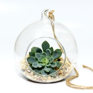 Hanging Glass Bauble Succulent Terrarium Kit