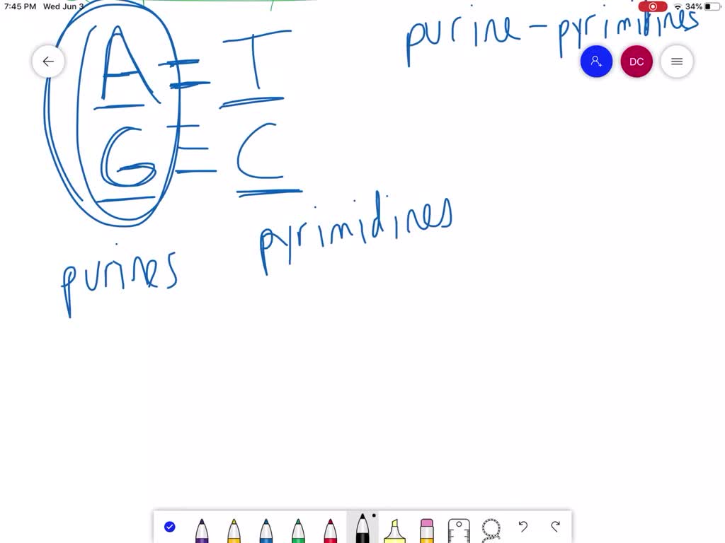 Solved Which Statement About Complementary Base P
