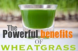 The Powerful Benefits of Wheatgrass