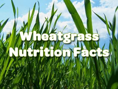 wheatgrass-nutrition-218d87b4-e3f9-4e96-8a61-e2fe2783bfe9