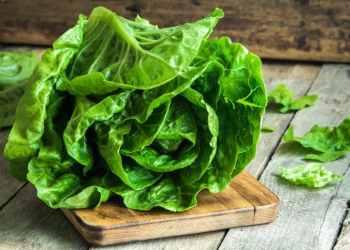 Lettuce Focus on the E-Coli Outbreak