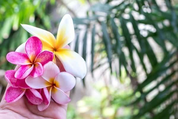 rescue spa day hawaiian flowers