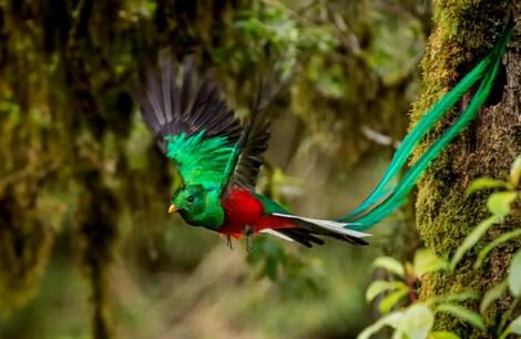 Resultado de imagen para ave quetzal sin copyright