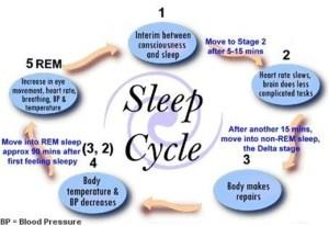 The Sleep Cycle: Do You Get Enough Undisturbed Sleep? — Oh