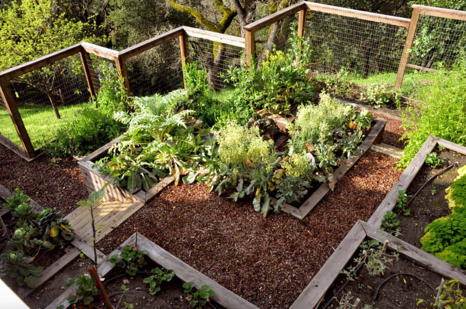 30 Amazing Ideas For Growing A Vegetable Garden In Your ... on Outdoor Vegetable Garden Ideas id=62625