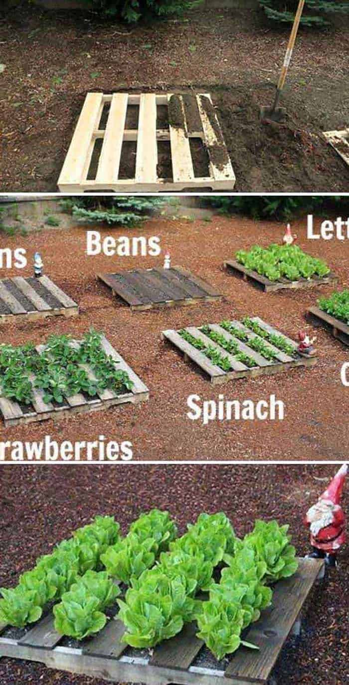 30 Amazing Ideas For Growing A Vegetable Garden In Your ... on Outdoor Vegetable Garden Ideas id=56050