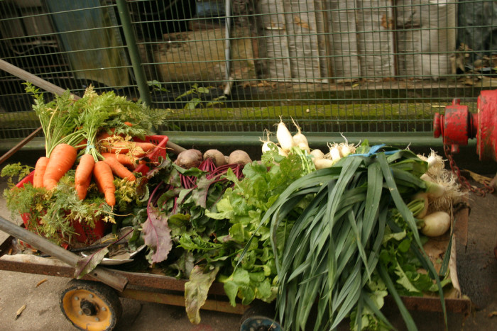 Fresh Vegetables Shipped Your Home