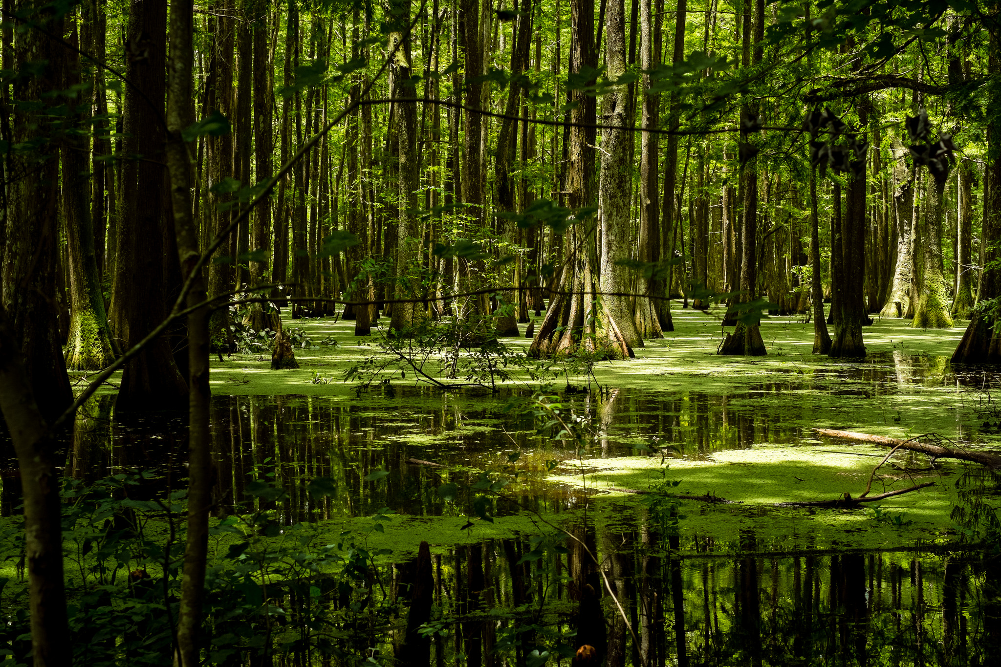 If You Live In Louisiana You Must Visit This Amazing