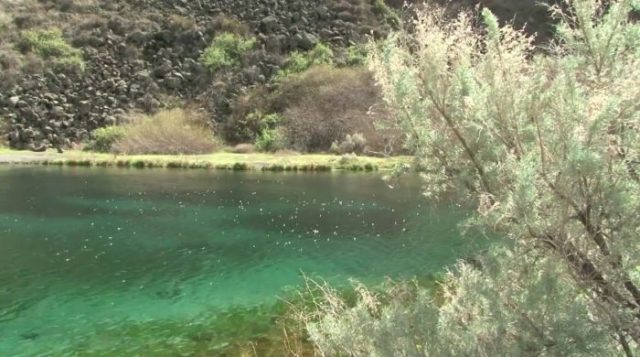 5. Box Canyon Springs, Hagerman