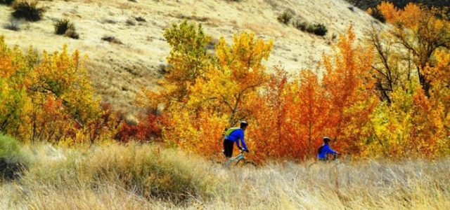 During the fall, some trails are perfect for viewing autumn's changing colors, and lead to scenic overlooks of Boise's namesake trees.