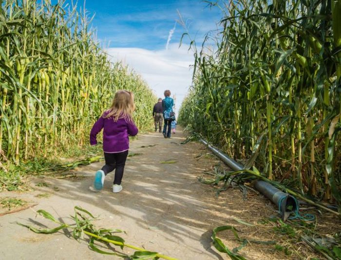 best corn mazes nevada
